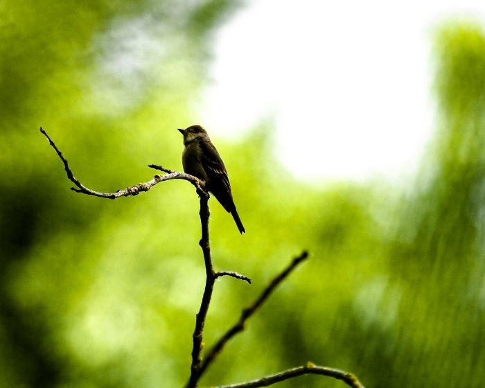 bird_5